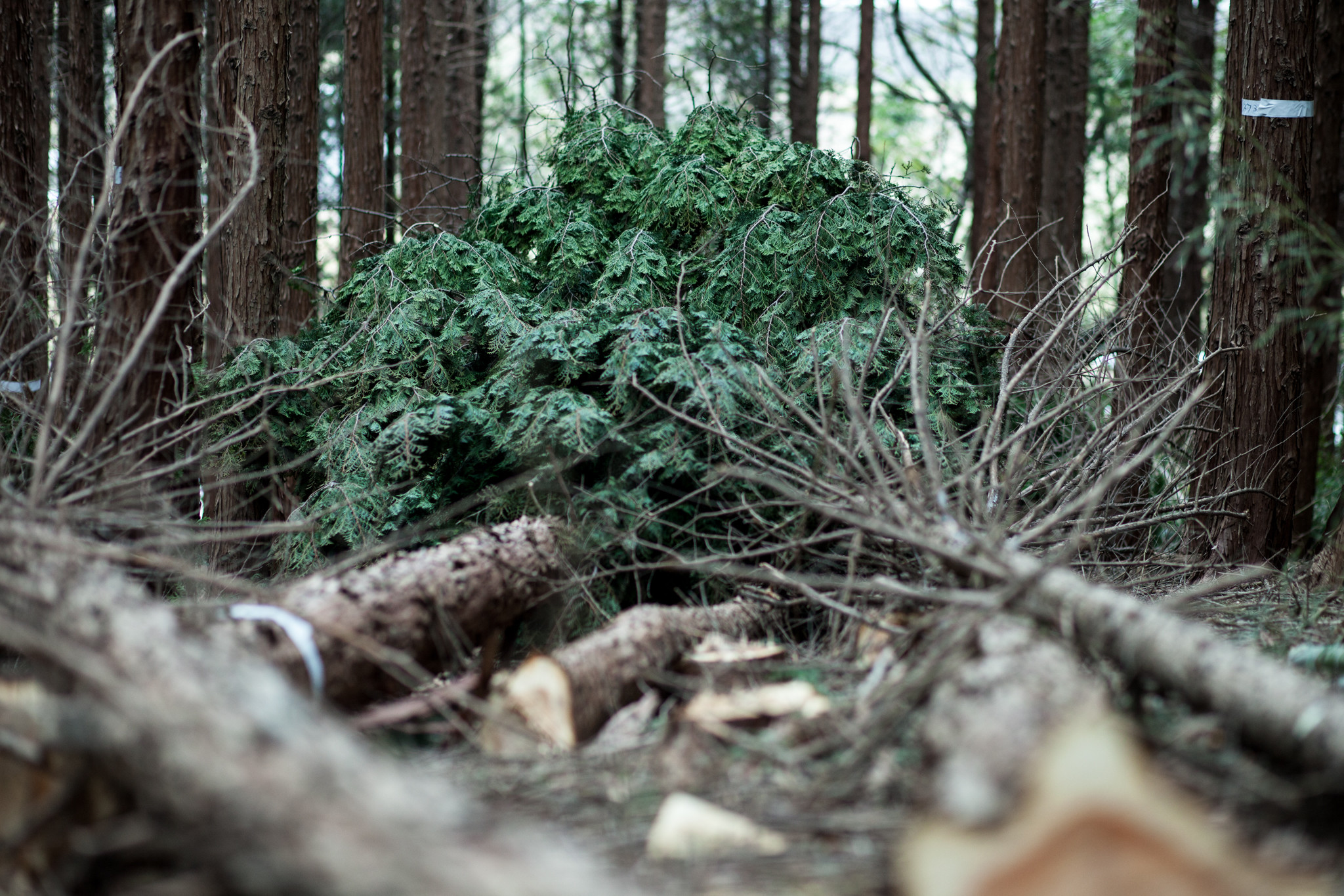 伐採の様子